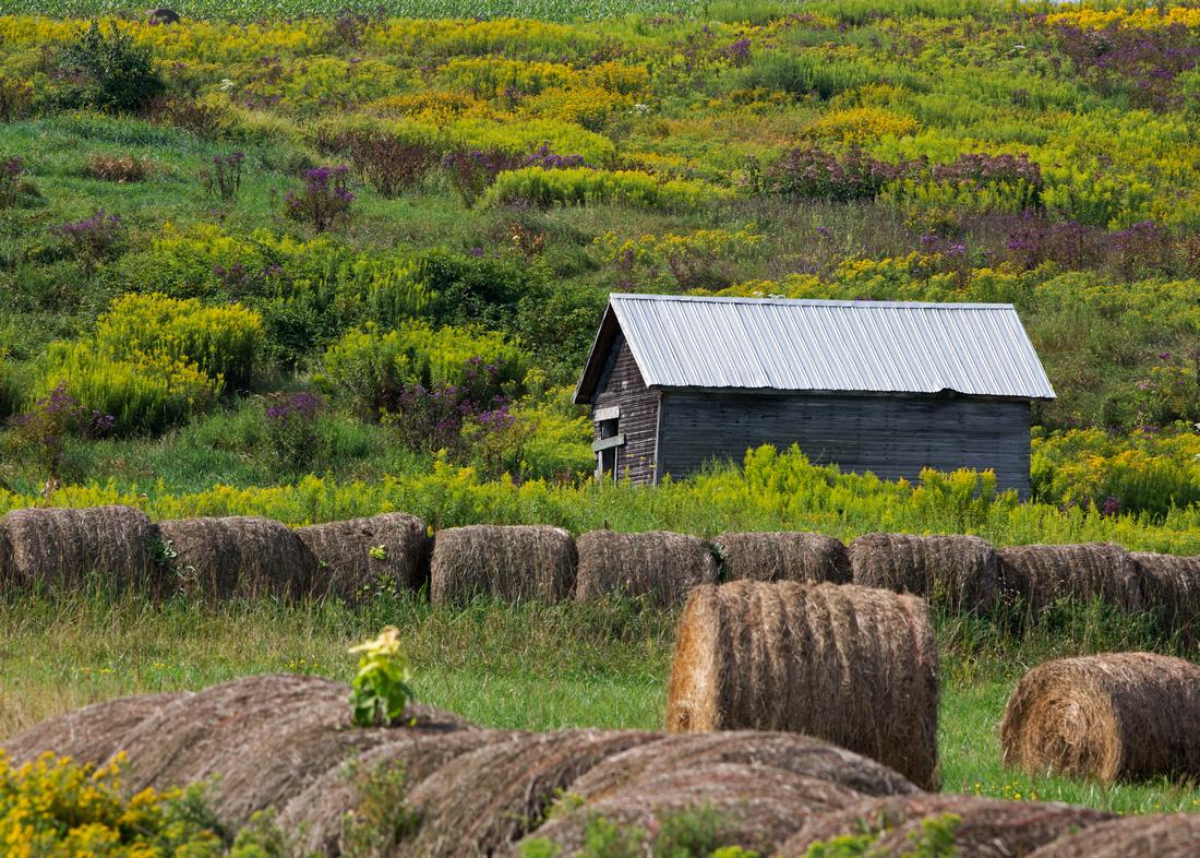August Landscape