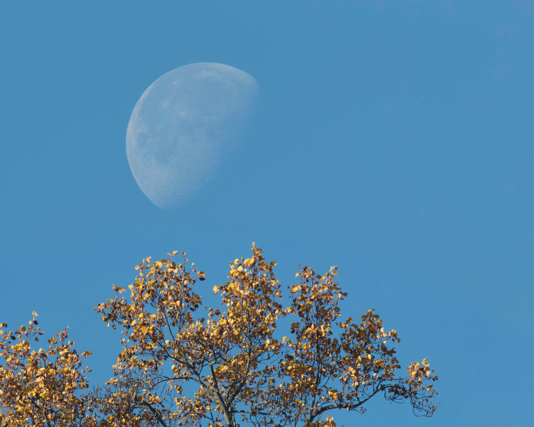 One Week After Super Moon